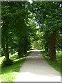 SJ5509 : Tree-lined walk by Philip Halling