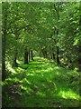 TQ1714 : Bridleway, Wappingthorn Wood by Simon Carey