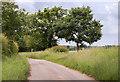 TG1021 : Furze Lane by J.Hannan-Briggs
