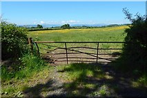 NS3478 : Field gate by Lairich Rig