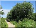 TF7443 : Main path, Titchwell RSPB reserve by Hugh Venables