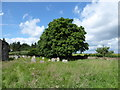 TF1406 : Tree in Etton Churchyard by Basher Eyre