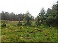 NM4520 : Deer grazed trees by Mick Garratt