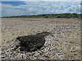 TF7544 : Peat and razor shells by Hugh Venables