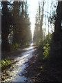 SJ7678 : Lime Walk in the morning by Schlosser67