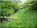 SE0929 : Ruined field wall in a plantation near Shibden Head, Queensbury by Humphrey Bolton
