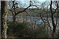SX1256 : Trees above the Fowey estuary by Derek Harper