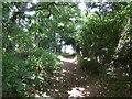 TM3544 : Footpath in woodland near Glebe House by Chris Holifield