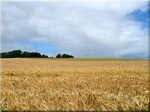 TQ1913 : Crabs Field/Rye Field (2) by Simon Carey