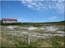 HU5463 : A field at Marrister, Whalsay by David Purchase
