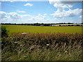 SP1101 : Arable fields opposite Field Barn by Vieve Forward