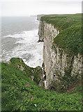 TA1974 : Bempton Cliffs by Anne Burgess
