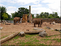 SJ4170 : Elephant Enclosure, Chester Zoo by David Dixon