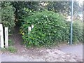 SZ0793 : Talbot Village: footpath N12 enters the woods by Chris Downer