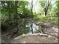 SJ8442 : Stream through wood near Westbury Park by Jonathan Hutchins