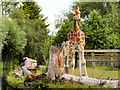 SJ4170 : Chester Zoo Giraffe Enclosure by David Dixon