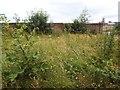 SE3220 : Wakefield Westgate station - wildflowers by Stephen Craven