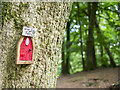 J0419 : Fairy door, Slieve Gullion by Rossographer