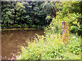 SD6008 : Pool at Haigh Hall Country Park by David Dixon