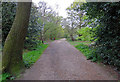 TQ2897 : Wide path through the trees in Trent Country Park by Andrew Tatlow