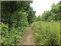TQ8058 : Castle Hill, near Thurnham by Chris Whippet
