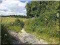 TQ8257 : Coldharbour Lane, near Thurnham by Chris Whippet