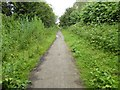 TA2046 : Hornsea Rail Trail #24 by Steve  Fareham