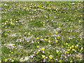 NF6970 : The Machair in flower by M J Richardson