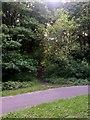 SZ0895 : Redhill: bridleway O16 from bridleway O14 by Chris Downer