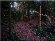 SZ0895 : Redhill: heading for Redhill Drive on footpath O08 by Chris Downer