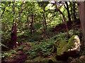 SK2578 : Padley Gorge by Stephen Burton