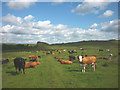 NY7166 : Cattle at Cawfields by Karl and Ali