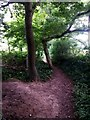 SZ1095 : Muscliff: weirdly shaped tree by footpath M17 by Chris Downer