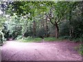 SZ0794 : Talbot Village: the track ends but footpath N15 continues by Chris Downer