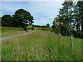 SN9775 : Wide grass verge on the B4518 near Pwll by Christine Johnstone