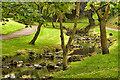 NZ4249 : Dawdon Burn by Mick Garratt