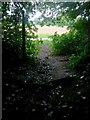 SZ0794 : Talbot Village: footpath N16 heads out of the woods by Chris Downer