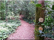 SZ0794 : Talbot Village: footpath N37 doesn't have a yellow arrow by Chris Downer