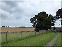 SU6517 : Farmland south-east of Chidden by Basher Eyre