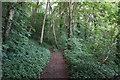 SE5017 : Brockadale Nature Reserve, Kirk Smeaton by Ian S