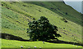 NY3715 : Tree with wall in Grisedale by Trevor Littlewood