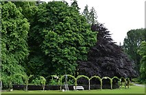 NJ1736 : Ballindalloch Castle and Gardens: Tending one of the Clematis arches by Michael Garlick