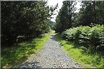 NX4565 : Trail to Kirroughtree Visitor Centre by Billy McCrorie