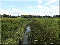 TM0179 : Little Ouse River off Thelnetham Road by Adrian Cable