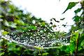 SJ5686 : Spider web 'chandelier' Penketh Marina by Matt Harrop