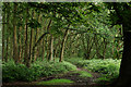 TL4401 : Epping Forest by Peter Trimming