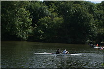 TQ1672 : View of a canoe on the River Thames from the riverside path in Radnor Gardens #2 by Robert Lamb