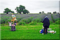 ST7354 : Painting the lavender fields by Rose and Trev Clough