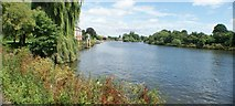 TQ1672 : View along the River Thames from the riverside path in Radnor Gardens #2 by Robert Lamb