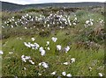 NX4965 : Cotton grass on Crammery Hill by Jim Barton